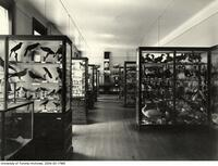University of Toronto Museum, bird cases in biological building
